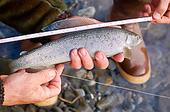 Arctic Grayling Fishing_Canning River_Arctic national wildlife refuge