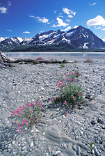 alsek river rafting_alaska whitewater rafting_glacier_bay_national Park